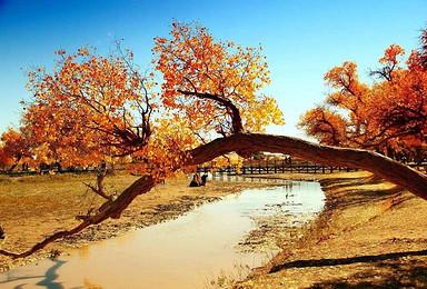 国庆额济纳 大美胡杨林 越野车穿越沙漠 最震撼心灵的美(6日行程)