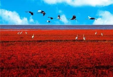 赏天下奇观 盘锦红海滩 游兴城龙回头 走神奇天路 笔架山(3日行程)