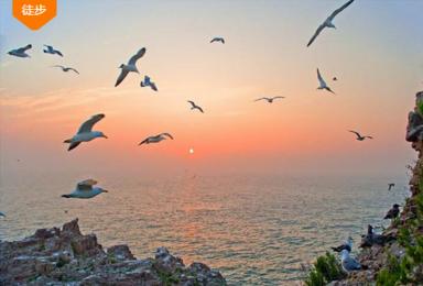 海驴岛 海鸥王国万鸟齐飞 爸爸去哪儿 鸡鸣岛 海洋牧场(3日行程)