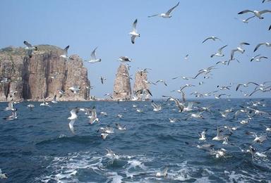 神奇海岛游 长岛 蓬莱 万鸟岛 拍片吃海鲜(4日行程)