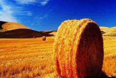 秋季呼伦贝尔 海拉尔 满洲里 阿尔山 鲁古雅使鹿部落(8日行程)