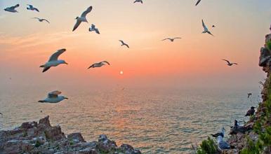 海驴岛 海鸥王国万鸟齐飞 爸爸去哪儿 海上桃源 鸡鸣岛(3日行程)