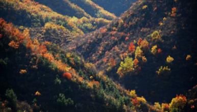 百里画廊 永宁古城 乌龙峡谷 硅化木地质公园(1日行程)