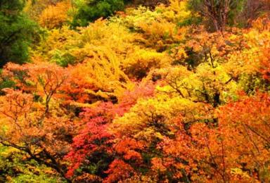 等了那么久 栖霞山这一片秋色美得犹如仙境(1日行程)