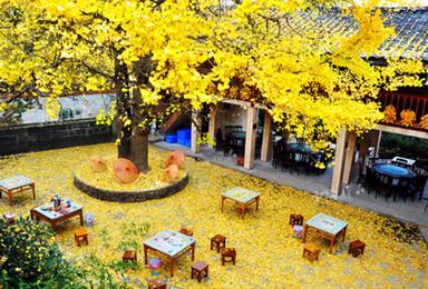 12月云南无量山樱花谷纯洁的樱花热情的向你微笑(8日行程)