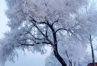 元旦东北 雪乡 长白山 温泉滑雪(6日行程)