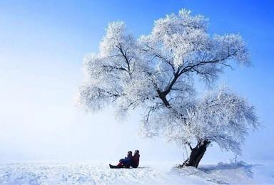 元旦 相约东北雪乡 相约童话王国 约伴捡人一起去(7日行程)