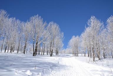 这个冬天去东北 雪乡A线 哈尔滨 雪乡 雪谷 索非亚教堂(3日行程)