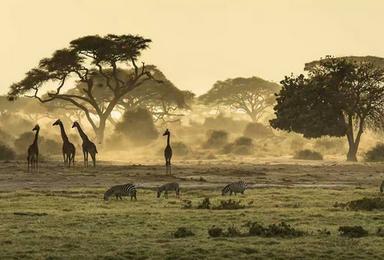 东非狂野游猎之路(9日行程)