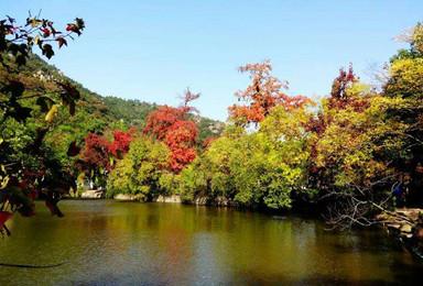 徒步苏州天平山 赏红枫银杏 寻找那一抹惊艳的秋(1日行程)