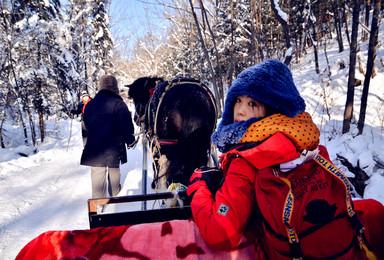 包车约伴家庭游 哈尔滨 雪谷徒步雪乡 长白山 半自由行(7日行程)