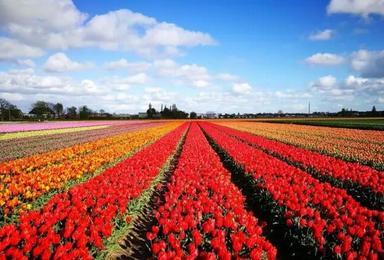 提前预订2018年骑游荷兰欣赏花园王国的旅行计划(8日行程)