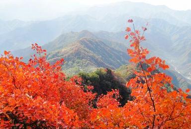 12月17日赏圭峰山漫山枫叶红 品陈皮村特色火焰鹅(1日行程)