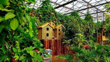 呀路古 北京最大热带植物园 领略缅北风情(1日行程)