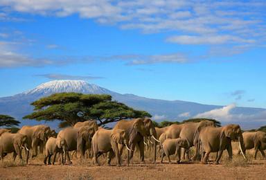 乞力马扎罗最美莱莫绍路线和坦桑尼亚经典游猎(13日行程)
