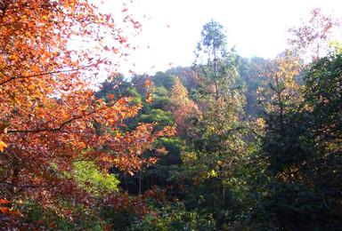 从化通天蜡烛爬山 枫树湾赏红叶  登山 海拔1047米(1日行程)