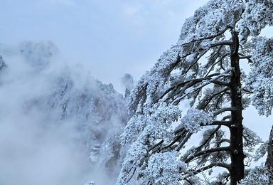 今冬黄山雪景之旅 半价门票 看日出 观云海 等日落 望星空(3日行程)
