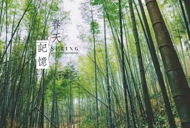 广州从化星溪竹林徒步穿越 周末出行(1日行程)