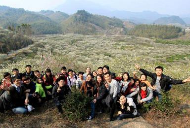 广州出发从化黄茶园登高 漫步在李花海洋 爬山 赏花 摄影(1日行程)