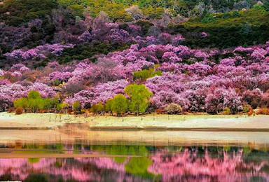 3月 丙察察进藏 走不一样的路 看最美的林芝桃花(10日行程)