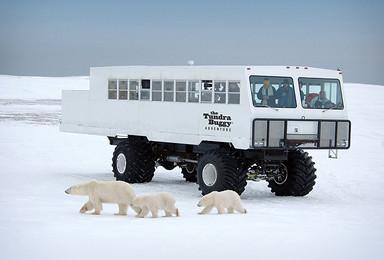北极熊打猎房车游艇班夫国家公园精品小众高端团(15日行程)