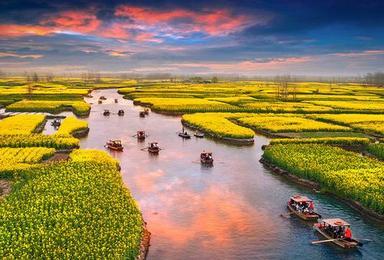 烟花三月游响水涧万亩水上金色花海 泛舟垛田油菜花(3日行程)