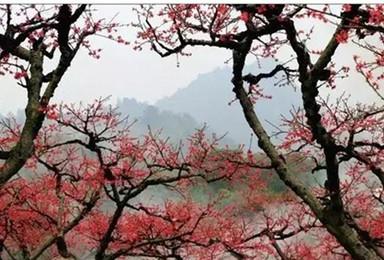非周末 0306春风不负三月桃花连平翁源徒步 河源韶关(2日行程)