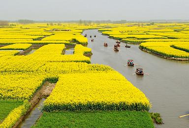 周末水上江南兴化扬州盐城 赏江南园林水上森林与油菜花海(2日行程)