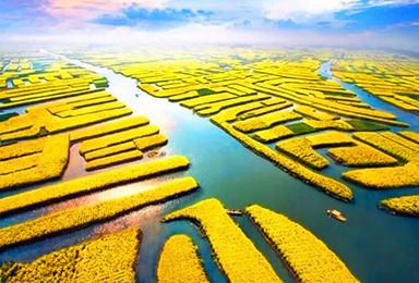 清明节 千岛油菜花 瘦西湖 个园 何园 京杭大运河(4日行程)