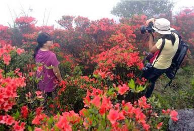 广州第一峰 从化天堂顶 海拔1210米 爬山挑战 赏杜鹃花(1日行程)