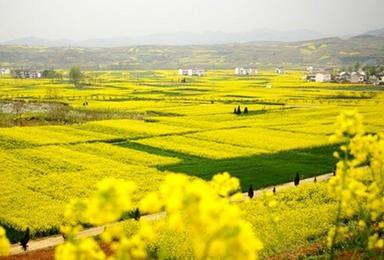汉中油菜花 汉江三峡游船 石泉老街迎春之旅(1日行程)