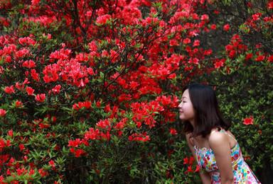 新兴天露山 高山草原爬山徒步 看漫山杜鹃花开 登广东千米山(1日行程)