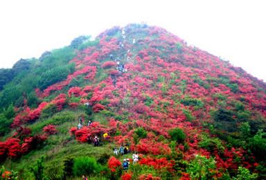 从化通天蜡烛爬山 看漫山杜鹃花 登山 赏花 海拔1047米(1日行程)