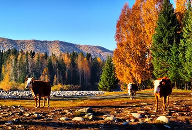暑期新疆 吐鲁番 库木塔格沙漠 可可托海 喀纳斯 禾木(9日行程)