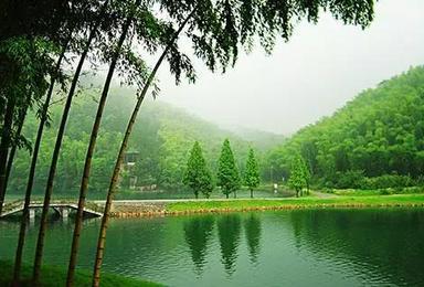 5 12护士节特价 轻松畅游竹的海洋 尽情呼吸春的气息(1日行程)