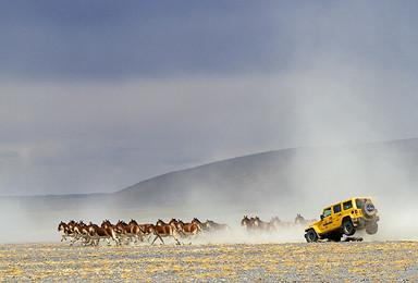 可可西里 跟随藏羚羊迁移的脚步走进可可西里 越野大西北(8日行程)