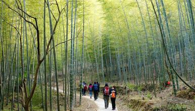 从化星溪线踏青 竹海徒步 纵意山野 最初级户外体验 吃竹筒饭(1日行程)