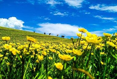 5月新疆花海 红黑峡谷 空中草原 丹霞地貌 沙漠等天山小环线(7日行程)
