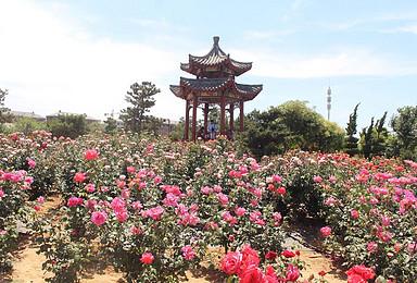 莱州云峰山加中华月季园休闲赏花一日游(1日行程)