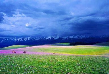 北疆最美的花海 草原 湖泊 峡谷 丹霞地貌 沙漠(10日行程)