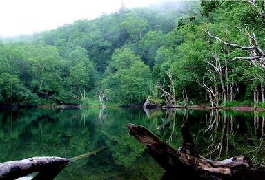 端午 火车 最美长白山天池 地下森林 长白山瀑布  高山花园(3日行程)