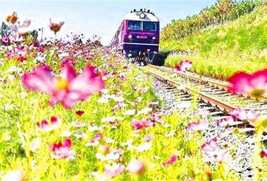 这趟小火车穿越山和大海 沿途还有花田遍野 简直美成童话(2日行程)