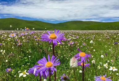 川西 川藏 珠峰阿里 新疆 青海私人定制包车(5日行程)