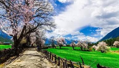 圆梦滇藏 林芝桃花节特别路线 雪域高原之旅(8日行程)