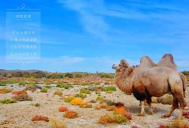 北疆B线 五彩滩禾木村喀纳斯魔鬼城可可托海库木塔格沙漠火焰山(9日行程)