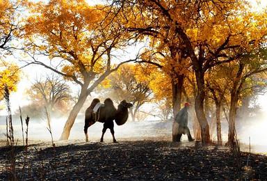 金秋额济纳旗胡杨 金塔胡杨林 巴丹吉林沙漠 张掖摄影团(12日行程)