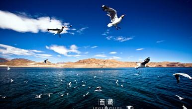 极地阿里穿越冒险之旅 走进无人区 体验别样生活 全程普拉多(13日行程)
