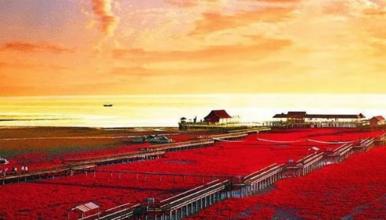 中秋 徜徉在红色海滩上 潮水落尽天桥现(3日行程)