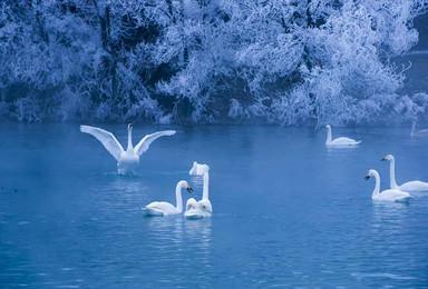 新疆天鹅泉 冰雪赛湖 罗布泊大海道 小南湖深度独家摄影团(10日行程)