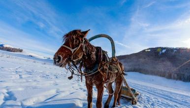冰雪喀纳斯 滑雪   新疆 禾木 喀纳斯 白哈巴 将军山(7日行程)